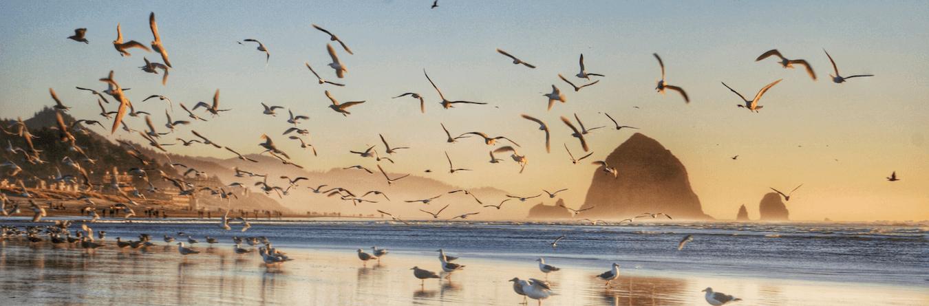 Seagulls at a beach