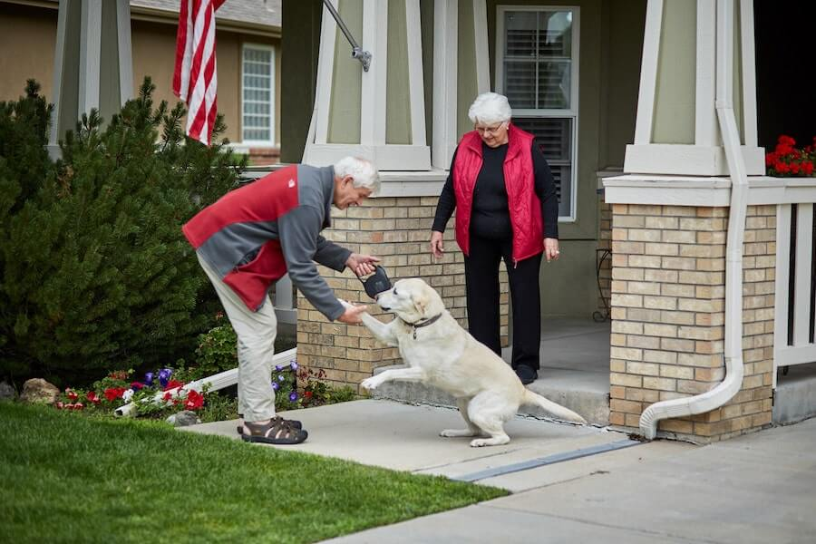 seniors playing with a dog