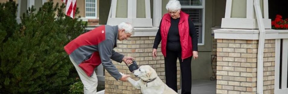 seniors playing with dog